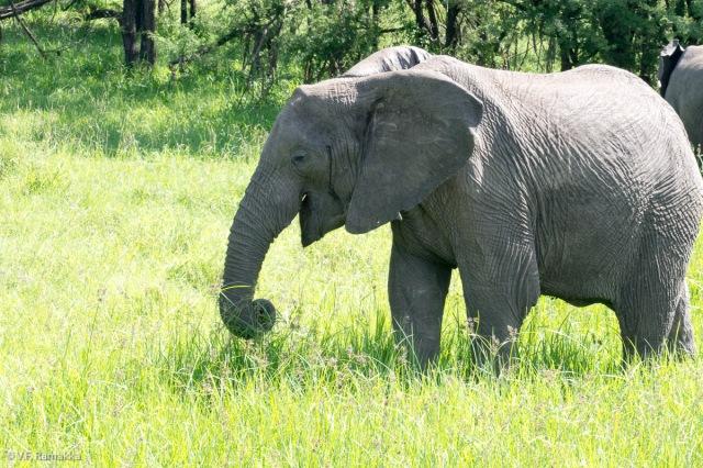 Africa_Buffalo_Camp_Day_1_081