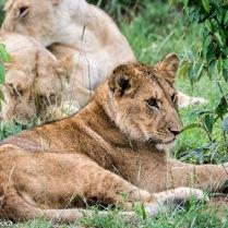 Serengeti Jim 7100-211